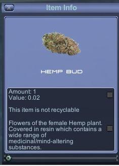Hemp%20bud.jpg