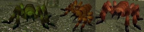 Spider%20trio.jpg